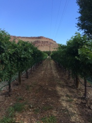 A Colorado vineyard on the Western Slope